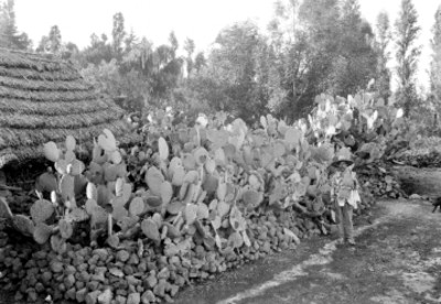 Campesino junto a nopalera en Xochimilco, retrato