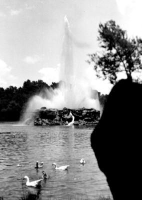 Patos en el Lago de Chapultepec, vista parcial
