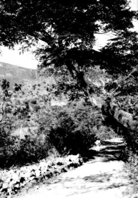 Hombre parado en el camino de Taxco al Naranjo, paisaje