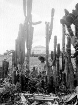 Hombre indígena junto a cactus, retrato