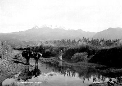 Hombre indígena con asnos en un camino