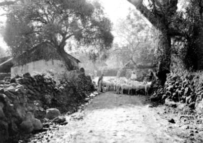Pastores indígenas junto a rebaño de ovejas en un camino