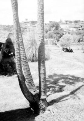 Jardín del rancho Amanalco