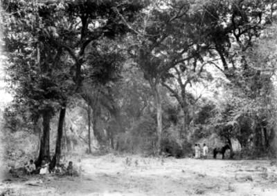 Gente en un bosque