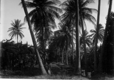 Niños indígenas junto a palmeras, retrato de grupo
