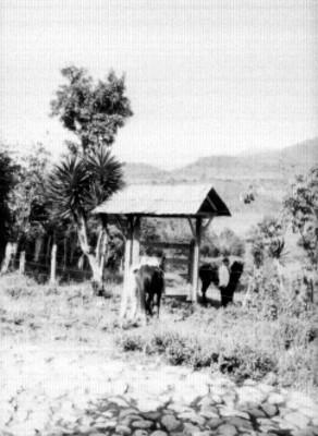 Hombre y caballos junto a techumbre, al fondo el Pico de Orizaba