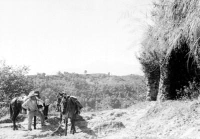 """Hombre con caballos en un paraje, al fondo el """"Pico de Orizaba"""""""