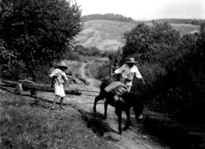 Hombre y niño indígenas transportan troncos con un asno