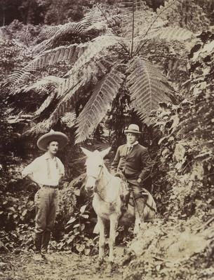 Hombre monta una mula mientras su compañero mira a la camára