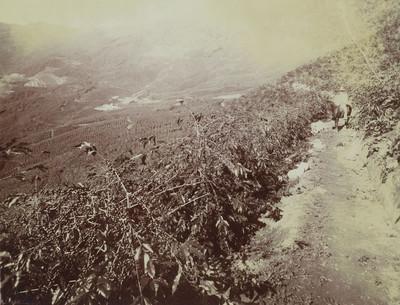 Hombre con caballo en un camino de los campos de cultivo