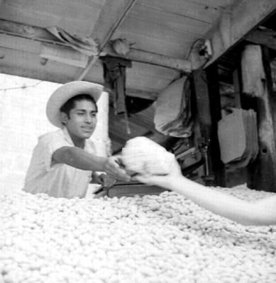 Hombre despacha cacahuates en el mercado la Merced