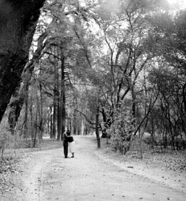Pareja se besan en una calzada del bosque de Chapultepec