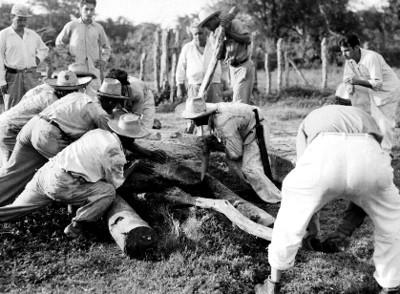 Arqueológo y trabajadores levantan una estela
