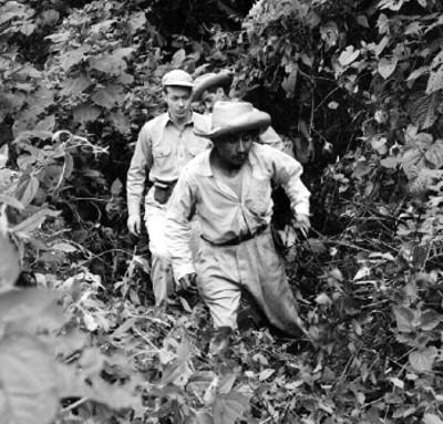 Trabajadores entre la maleza durante una expedición