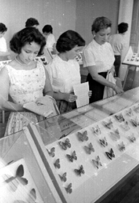Mujeres observan una exposición de mariposas disecadas