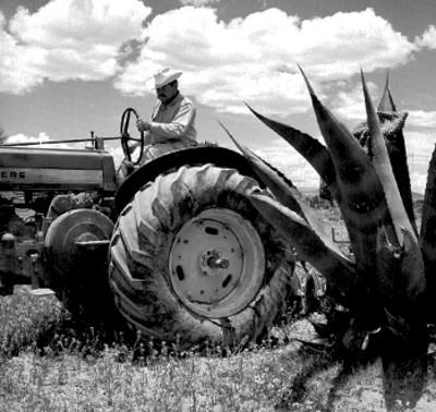 Agricultor con tractor barbecha en un campo