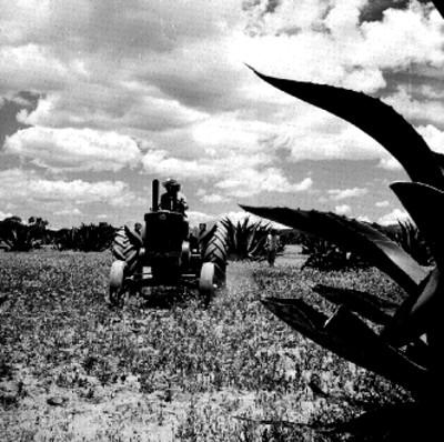 Tractor en el campo de cultivo