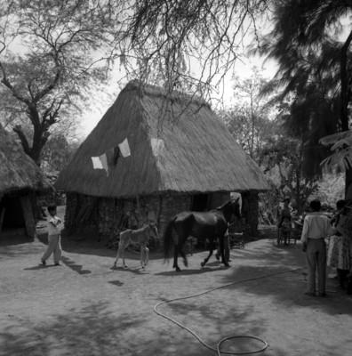 Eusebio Abasolo y familia observan una yegua en un patio