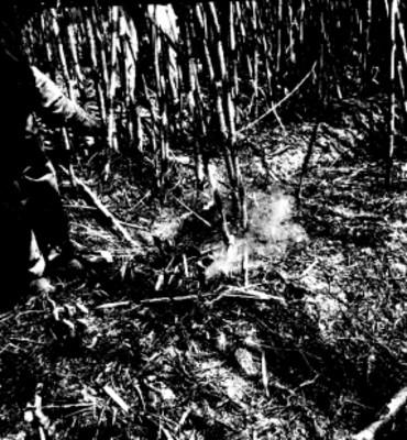 Trabajador cortan caña de azúcar
