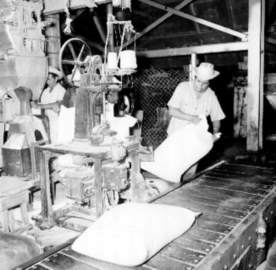 Trabajadores envasan y sellan bultos de azúcar refinada