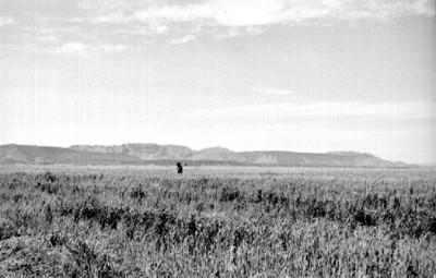 Campo de cultivo, vista parcial