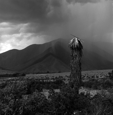 Cactus y montañas con lluvia al fondo