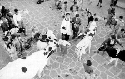 Sacerdote bendice animales en el atrio de la iglesia de Mixquic