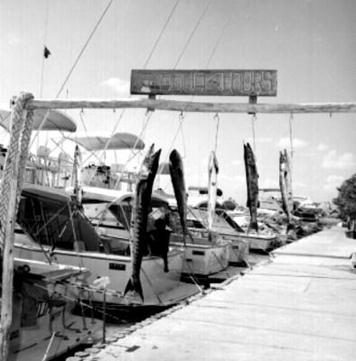 Muelle, exhibición de pesca