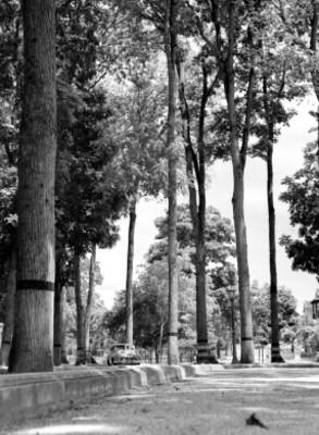 """Parque """"Las"""""""