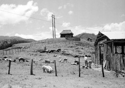Granja porcina promovida por el Instituto Nacional Indigenista