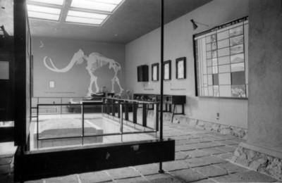 Vista de cráneos y fémures en una sala del museo prehistórico de Tepexpan