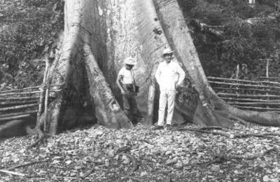 Arqueólogos bajo una ceiba durante exploración