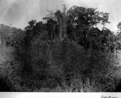 Zona arqueológica de Palenque antes de su desmonte