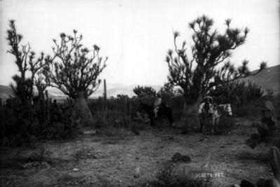Hombres entre paisaje de cactáceas, retrato de grupo