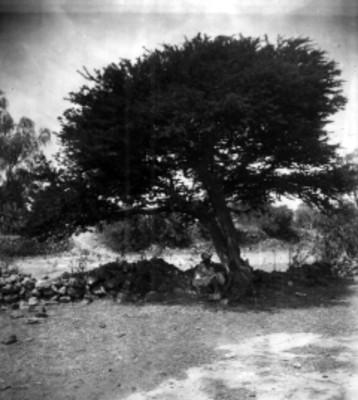 Indígena sentado bajo un árbol