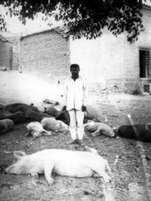 Hombre nahua enmedio de cerdos muertos, retrato