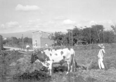 Pastores y vaca en el campo