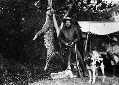 Cazadores con sus perros junto a jaguar colgado de un árbol