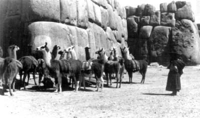 """Mujer junto a llamas en """"Cuzco"""""""