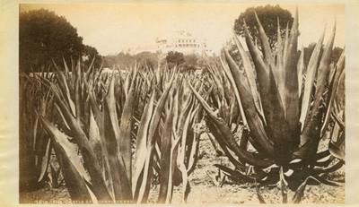 """El Castillo de Chapultepec, """"5613. The Castle of Chapultepec."""""""