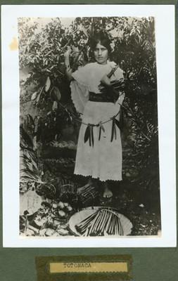 """Mujer """"Totonaca"""" recolectando la vainilla"""