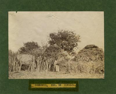"""Ocoronis, Edo. de Sinaloa"", hombre junto a hierba seca"