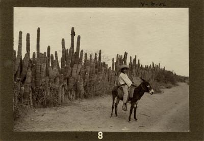 Niño ocoroni en burro