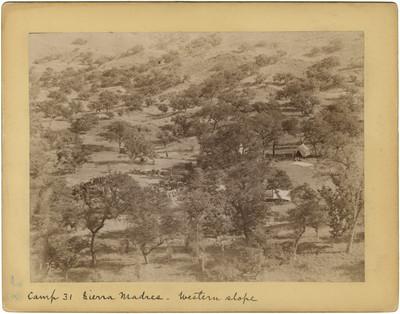"Campamento en la sierra madre, ""Camp 31 Sierra Madres. Western slope"""
