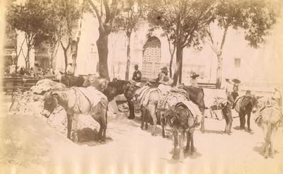 """Arrieros con """"burros"""" en una plaza pública"""