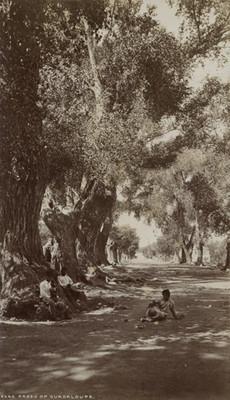 "Paseo de Guadalupe, ""5660. Paseo of Guadaloupe"""