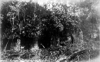 """""""No. 445. Fachada del palacio del Palenque, Chiapas"""" [sic]"""