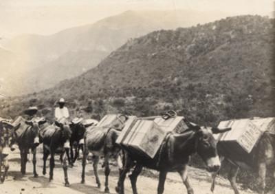 Hombres con burros de carga