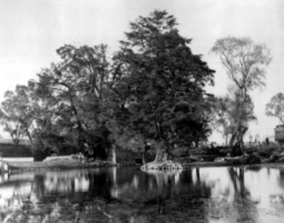 Vista parcial de un estanque junto a las vías del ferrocarril