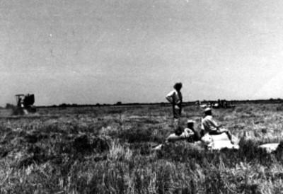 Campesinos trabajan en un campo de cultivo